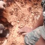 sauvetage-chien-soldat-guatemala