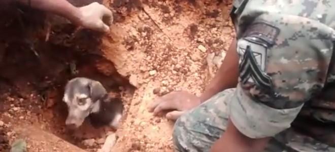 Des soldats sauvent un chien enterré vivant
