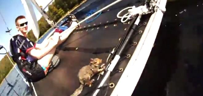 Sauvetage d'un écureuil dans un lac