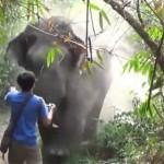touriste-elephant-charge