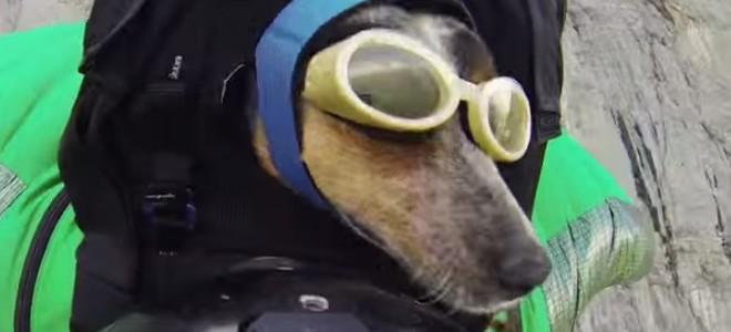Un chien fait du wingsuit avec son maître