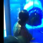 attaque-requin-ecran