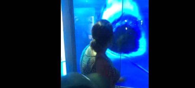 Un requin dans un aquarium attaque une femme
