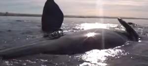 baleine-souleve-kayak