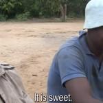 cacao-cote-ivoire-agriculteur-goute-cacao-premiere-fois