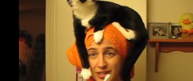 Un chat très collant et mignon