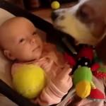 chien-jouet-bebe-mignon