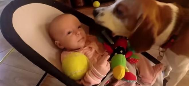 Ce chien essaye de se faire pardonner après avoir volé la peluche d'un bébé