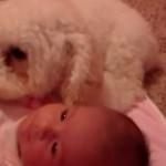 chien-protege-bebe-aspirateur