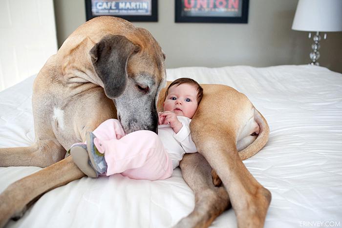 enfant-grand-chien-12