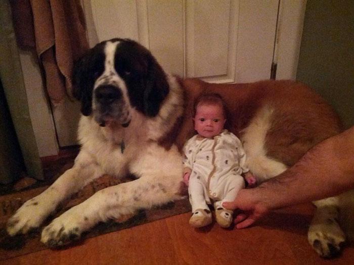 enfant-grand-chien-15