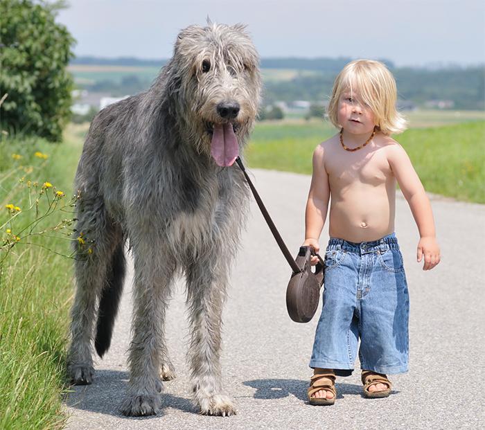 enfant-grand-chien-16