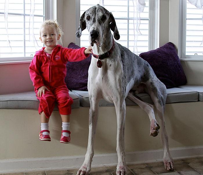 enfant-grand-chien-19