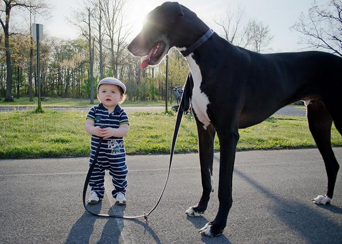 enfant-grand-chien-6