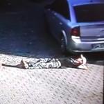 homme-ivre-tete-ecrase-voiture-garage-choc