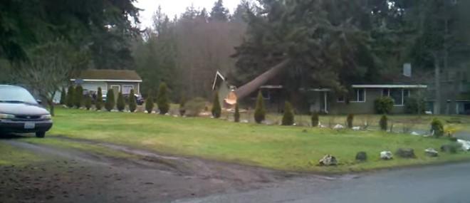 Un jeune bûcheron coupe un arbre qui écrase sa maison