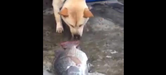 Un chien essaie de sauver des poissons