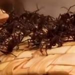 fourmis-rite-amazonie