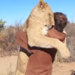 lion-saute-bras-homme-cute