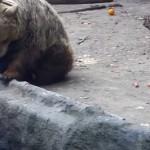 ours-sauve-oiseau-eau