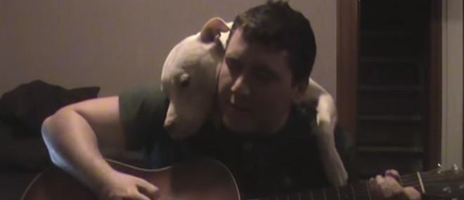 Un pitbull câline son maître quand il joue de la guitare