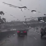 arbre-autoroute-voiture