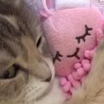 chat-dort-doudou