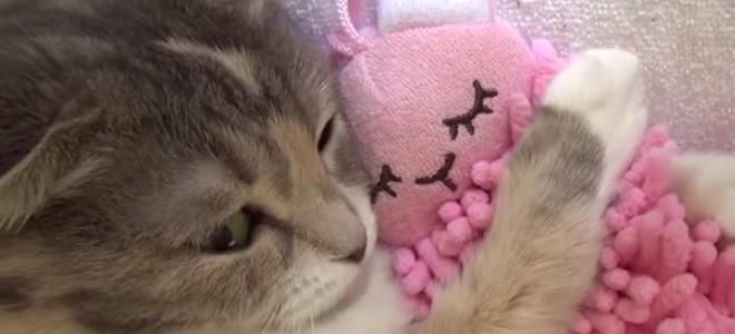Ce chaton veut absolument dormir avec son doudou