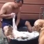 chien-baignoire-spa