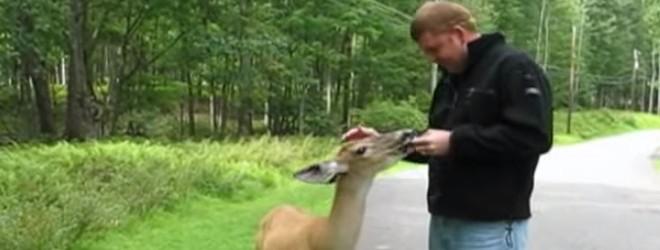 Il rencontre une biche très affectueuse en se promenant
