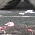 agriculteur-maltraite-animaux-ragondin