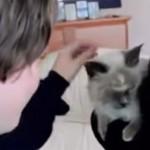 chat-retrouve-enfant-cute