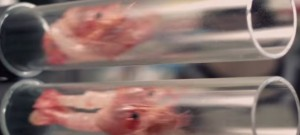 cuisson-crevette-gambas-3-secondes-japon