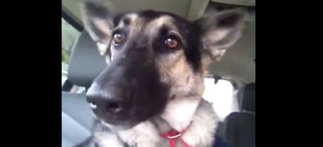Les oreilles d'un chien dansent sur «Low»