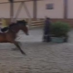 cheval-saut-obstacle-solo