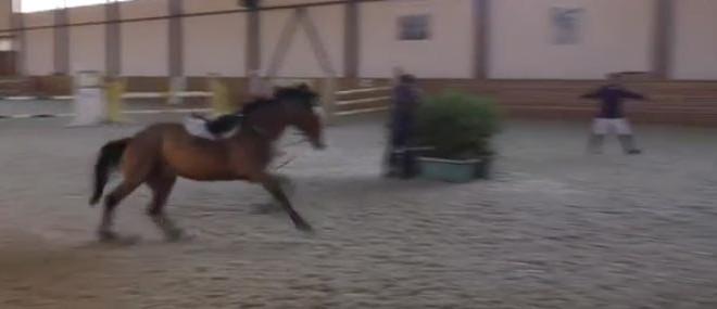 Un cheval fait du saut d'obstacles en solo