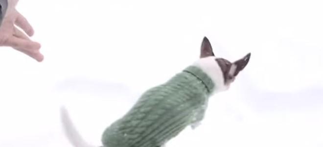 Pourquoi les chihuahuas ne courent pas dans la neige ?