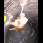 sauvetage-chien-puit