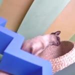 maison-pour-chat
