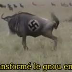lion-attaque-gnou-nazi