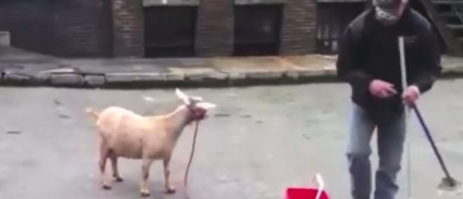 Comment faire une musique en samplant le cri d'une chèvre