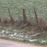 sanglier-course-poney