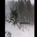 arbre-vs-telesiege