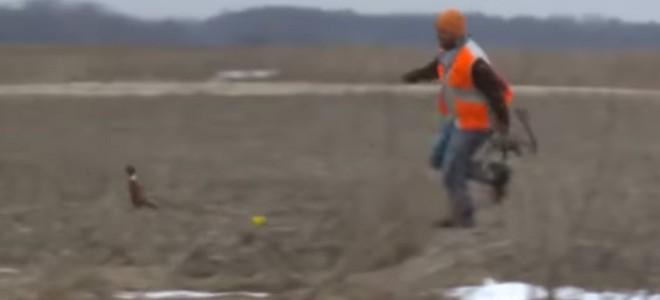 Un chasseur essaie d'attraper un faisan