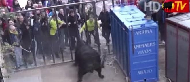 Un taureau en colère s'échappe de sa cage