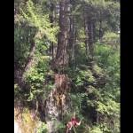 chute-arbre-fail