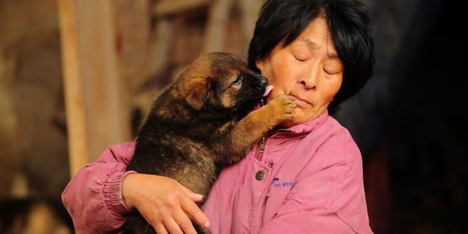 Une Chinoise a parcouru 2400 km et dépensé 1000 EUR pour sauver 100 chiens