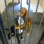 chien-adoption-1