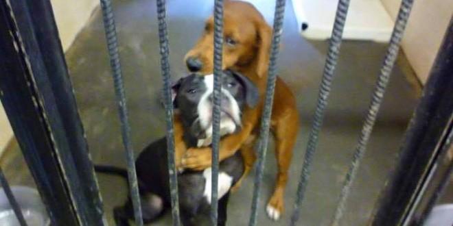 Deux chiens sauvés par la communauté Facebook