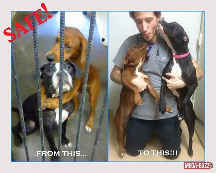 chien-adoption-2
